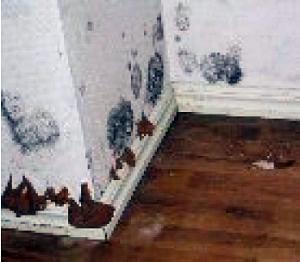 Presenza di Muffa e Putrefazione Secca sui Muri